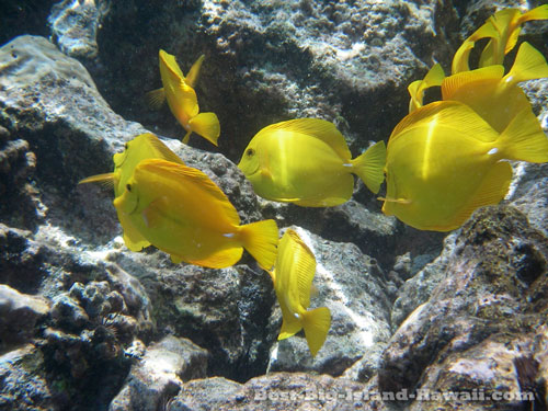 Best Snorkelling For Experienced Snorkelling On Big Island Hawaii