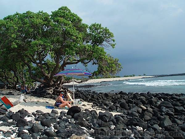 Pine Trees Beach Big Island Hawaii