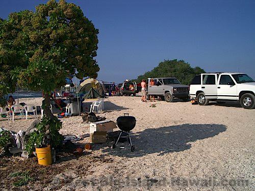 Pine Trees Beach Big Island Hawaii